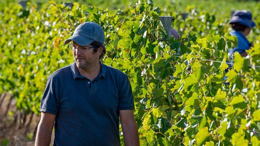Nicky Claasens: Vriesenhof Winemaker