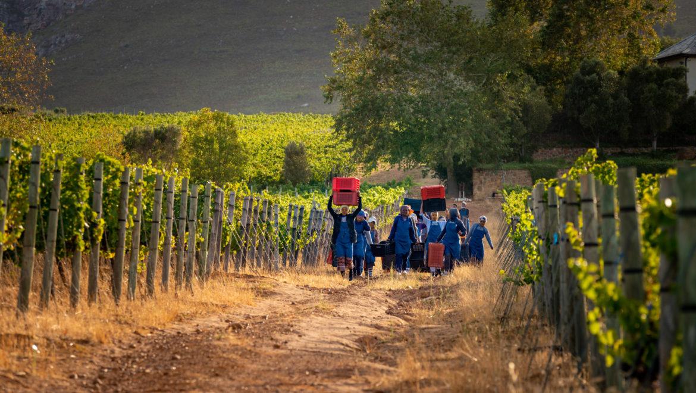 Vriesenhof Harvest 2020 Update